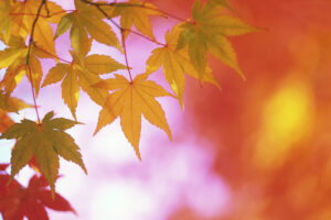 Autumn to Winter – The Seasons and Your Health