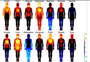A team of biomedical engineers has mapped the bodily reactions to emotions in 700 individuals and found that patterns were the same, whether the candidate was from Western Europe or East Asia.
